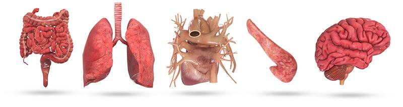 organes ELB